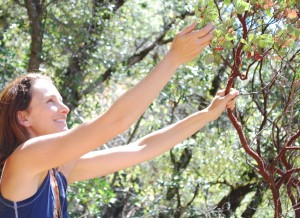 Alicia Funk Gathering Manzanita Berries