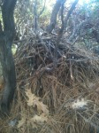 Wood Rat's Nest--Truly Art of the Wild