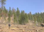 Farrell Cunningham in Historic Maidu Site, Logged by PG&E, CalFire