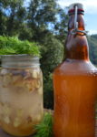 Douglas Fir Soda with Ginger Starter